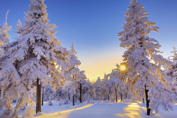 arbes-hiver-web